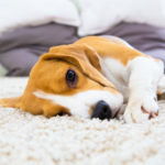 Carpet Cleaning Gilbert | Things to Consider
